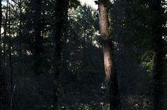 Paul Cezanne: Pintar la naturaleza no es copiar un objeto es la realización de una sensación.