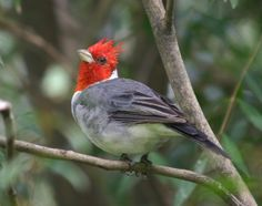 The Best Trees and Bushes to Attract Birds!