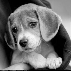 #OMGPuppies
