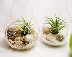 Surfboard Terrarium Medium Glass Globe by BeachCottageBoutique