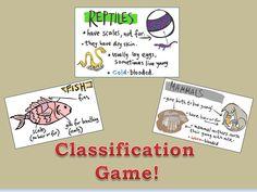 Fun animal classification game for preschool Reptiles, Mammals, Pre K Lesson Plans, Blueberries For Sal, Curriculum, Homeschool, Fish Fin, Animal Classification, Kindergarten Class