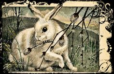Vintage French Rabbit Postcard