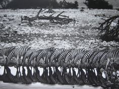 Masterful works from Brazilian photographer Sebastio Salgado