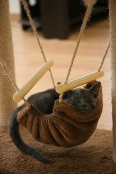 Kitty Hammock.  -    How cute!  I would need a little swing-set with three...and Diva/Queen cat would be in the middle where she would think she's special, but really it would be just to keep Emo/Assassin cat from eating my Schnauzer, who would be on the other end, happy and oblivious as usual. :)  Want.