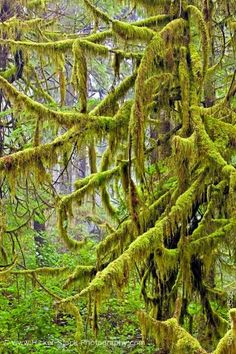 Moss in a rain forest