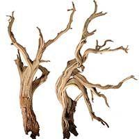How to make Mussel Shell Flowers - Maine Beach Driftwood Art Projects - Driftwood 4 Us Driftwood Beach, Driftwood Art, Manzanita Driftwood, Aquarium Driftwood, Driftwood Furniture, Maine Beaches, Driftwood Christmas Tree, Dry Tree, Shell Flowers