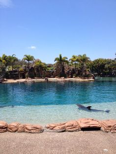 Imagine dolphin show - 2013