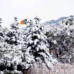 Estelada d'hivern. L'Espluga de Francolí - Feb. 2015 - Prov. Tarragona, Catalonia.