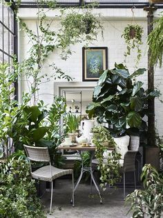 a Garden Room Filled with Plants