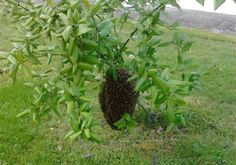 Found in the garden today... a beehive!