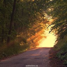 Free Image on Pixabay - Sunlight, Forest, Way, Path Diana Cooper, Luz Solar, Live Life Love, Now Faith Is, Spiritual Healer, Soul On Fire, Favorite Bible Verses, Dear Lord, Nature