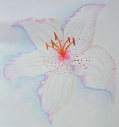 Watercolor Lily Painting  - Watercolor Lily Fine Art Print