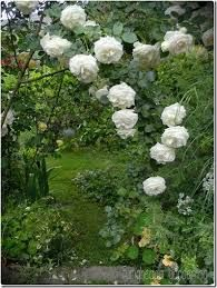 risultati immagini per creare un piccolo giardino nel prato ... - Piccolo Giardino In Casa