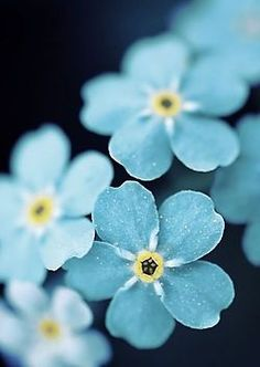 blue flower wallpaper Forget Me Blue Flowers Find more Vintage wallpapers for your + Flor Iphone Wallpaper, Blue Flower Wallpaper, Nature Wallpaper, Iphone Wallpapers, Iphone Wallpaper Themes, Cellphone Wallpaper, Mobile Wallpaper, Desktop, Beautiful Flowers Wallpapers