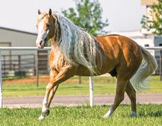 Cleaning the Chrome - Horse & Rider article.