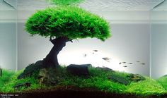 Such thing as aquascaping
