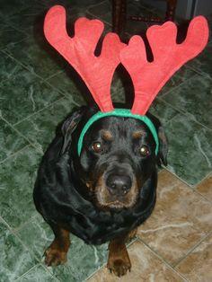 Christmas reindeer!