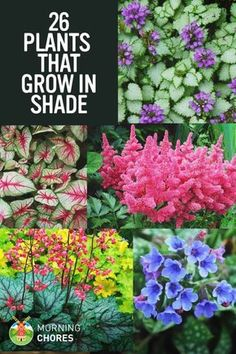 "Do you have a large shaded area in your garden that looks ""dead""? Here are 26 of the most beautiful plants that grow in shade."