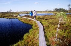 Ingatsi boardwalk to Kuresoo Peat-bog, Soomaa, Estonia Pagan Beliefs, Peat Moss, European Countries, National Parks, Places To Visit, Country Roads, History, World, Nature