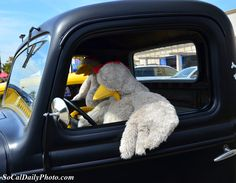 Foster Farms chickens driving