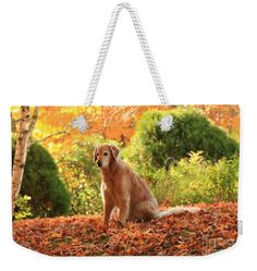 Autumn Weekender Tote Bag featuring the photograph Golden Autumn by Elizabeth Dow