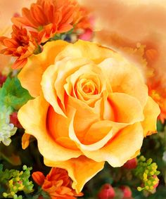 water-color-yellow-rose-with-orange-flower-accents-elaine-plesser.jpg (750×900)