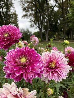 We love colorful dahlias in every colors ! Dahlias, Our Love, Colorful, Plants, Gardens, Planting Flowers, Dahlia Flower, Planters, Plant