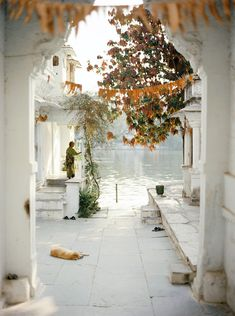 https://flic.kr/p/eg15xX | Udaipur | It's lovely walking through the Ghat's of Udaipur in the early morning, it's such a romantic city.   I really want to take Paveena there, I think she would love it.