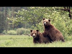 Bear Witness: a film by BC's Coastal First Nations   Sign the pledge to help save Grizzly bears!