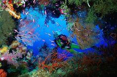 cayman islands scuba diving at devils grotto