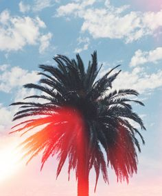 Sun, Sky and a beautiful Palm tree.  Can life get any better?