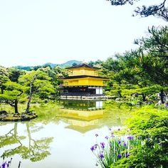 #Kinkakuji in #Kyoto, #Japan. This #goldenpavilion is located in the middle of the pond providing a brilliant reflection of the surrounding green trees and bushes along with this architectural marvel. http://www.templeseeker.com/temples-and-shrines-of-japan/