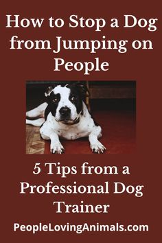 How to Stop a Dog from Jumping on People