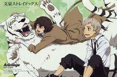 """Bungou Stray Dogs """"Really, Dazai? Fanarts Anime, Anime Manga, Anime Guys, Anime Art, Bungou Stray Dogs Wallpaper, Dog Wallpaper, 1080p Wallpaper, Wallpapers, Dazai Bungou Stray Dogs"""