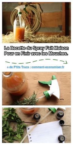 Homemade fly spray for your animals with simple ingredients and no toxic chemicals!: Homemade fly spray for your animals with simple ingredients and no toxic chemicals!