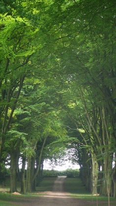 An alluring allee - a favorite! - on a chilly day in #NYC. #CranborneEstate #England