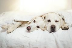 Yes, Dogs Also Have Best Friends! I Want To Show You My Golden Retriever Mali's Friends | Bored Panda