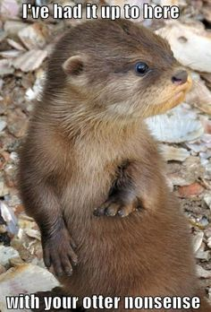 Otters are so cute