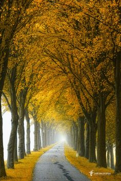 Thisappear III by Lars van de Goor on 500px