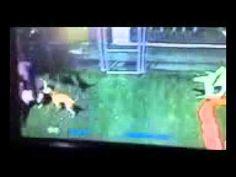 Dog attacked at cesar millans dpc