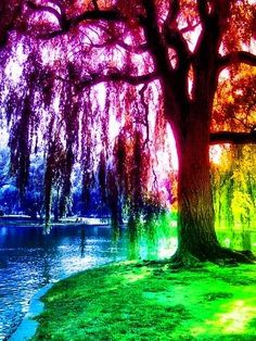 gorgeous rainbows | tree gorgeous colorful rainbow photoshop photo rainbowtreeeecopy.jpg