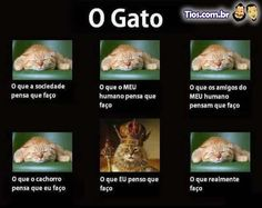 O Gato...