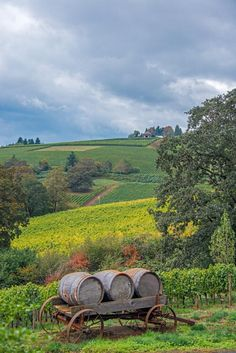 Viñedos - De Ponte Cellars, Tualatin Valley, Oregon, US / by Larry Andreasen on 500px