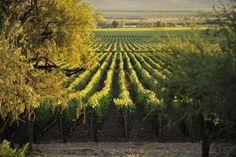 Tren Sabores Del Valle, Chile : Best Trains Through Wine Country : TravelChannel.com