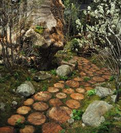 A somewhat aged wooden path