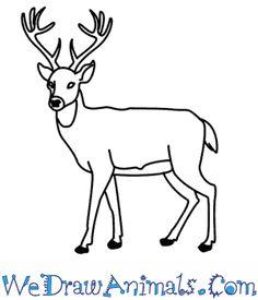 deer-thumb.png