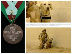 DOLLY HEROES Brave dog who died alongside his heroic handler was awarded the equivalent of the Victoria Cross ❤ Dolly