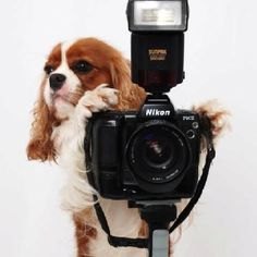 Forget the selfies, give me a real camera .....cavalier king charles