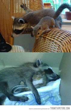 they aren't dogs but too cute!  These guys are best friends…