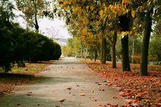 Autumn in Thessaloniki, Greece Thessaloniki, Greece, Sidewalk, Country Roads, Autumn, Greece Country, Fall Season, Side Walkway, Walkway